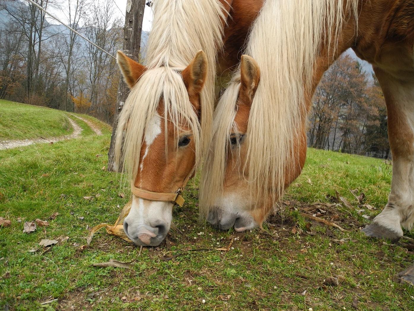 Cavalli a Vignui